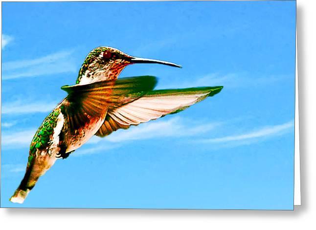 Hummingbird Lodi California Greeting Card by Bob and Nadine Johnston
