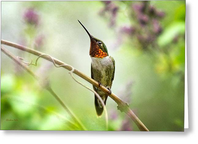 Hummingbird Looking For Love Greeting Card by Christina Rollo