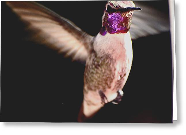 Greeting Card featuring the photograph Hummingbird Male Anna In Flight  by Jay Milo
