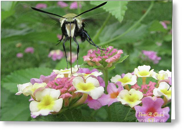 Greeting Card featuring the photograph Hummingbird Moth by Donna Brown