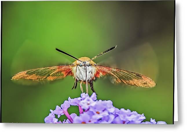 Hummingbird Moth Strike Greeting Card by LeeAnn McLaneGoetz McLaneGoetzStudioLLCcom