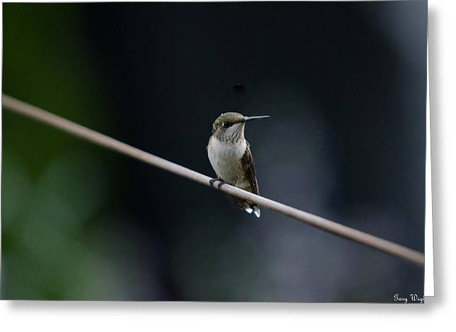 Hummingbird On A Wire Greeting Card by Gary Wightman
