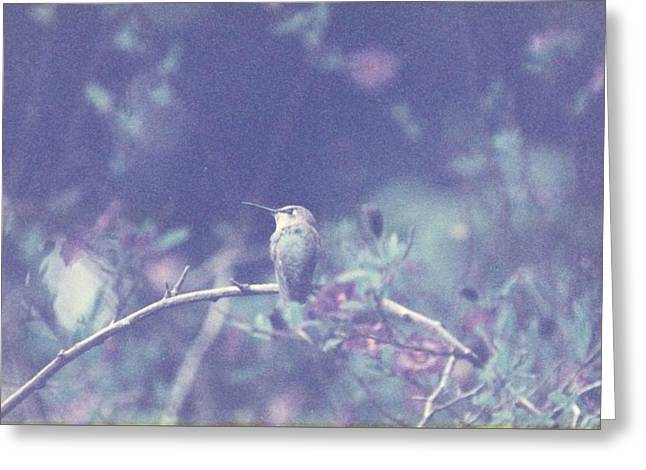 Greeting Card featuring the photograph Hummingbird On Potato Vine by Cynthia Marcopulos