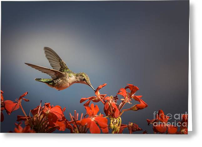 Hummingbird Or My Summer Visitor Greeting Card