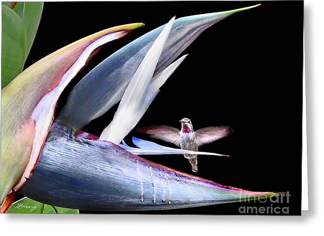 Greeting Card featuring the photograph Hummingbird Paradise by Jennie Breeze