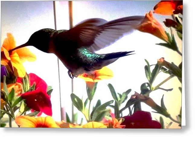 Hummingbird Greeting Card by Renee Michelle Wenker