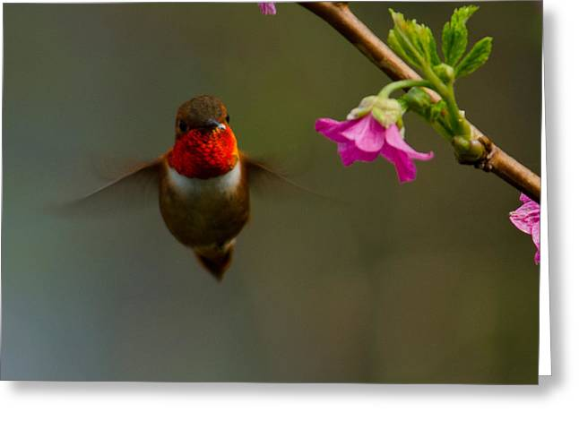 Hummingbird Greeting Card by Tikvah's Hope