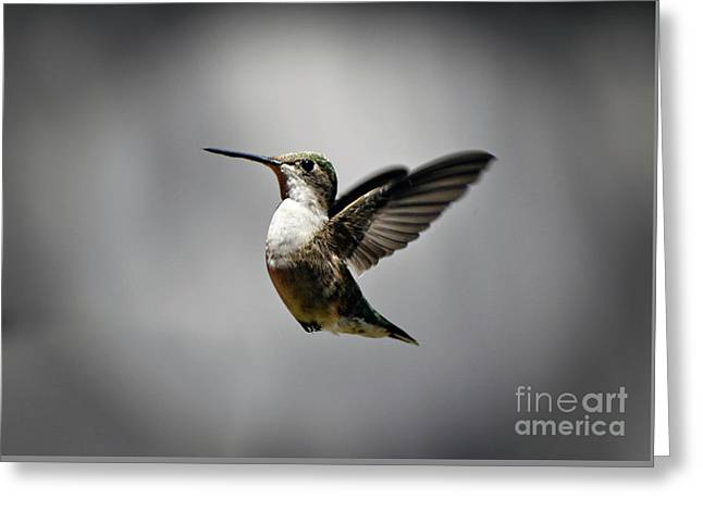 Hummingbird Greeting Card by Savannah Gibbs