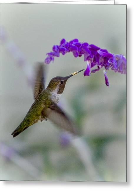 Hummingbird Series 01 Greeting Card