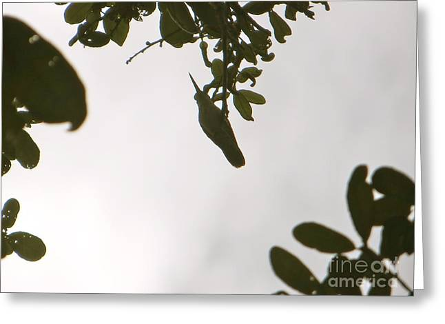 Greeting Card featuring the photograph Hummingbird Silhouette 1 by Joy Hardee