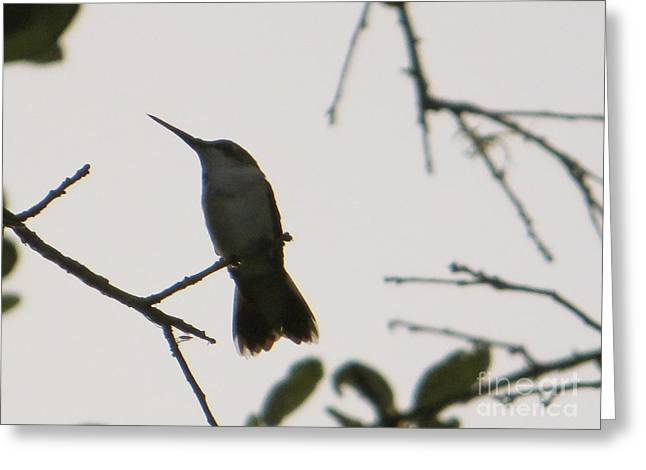 Hummingbird Silhouette 2 Greeting Card by Joy Hardee
