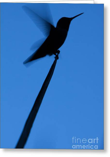 Greeting Card featuring the photograph Hummingbird Silhouette by John Wadleigh