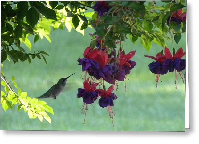 Greeting Card featuring the photograph Hummingbird by Teresa Schomig