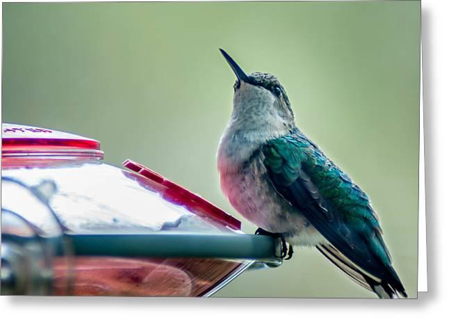 Hummingbird Greeting Card by Todd Soderstrom