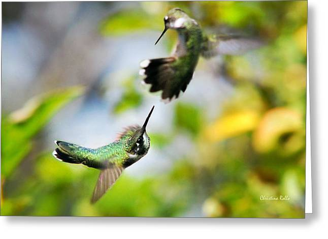 Hummingbirds Ensuing Battle Greeting Card by Christina Rollo