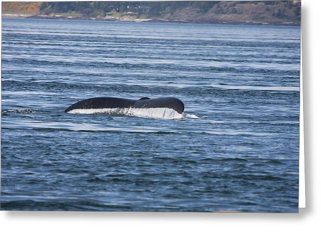 Humpback Whale - 0002 Greeting Card by S and S Photo