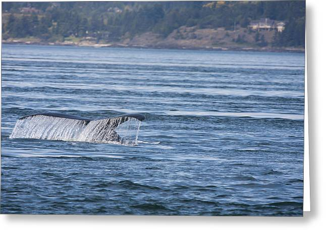 Humpback Whale - 0004 Greeting Card by S and S Photo