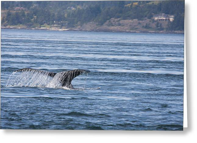 Humpback Whale - 0005 Greeting Card by S and S Photo