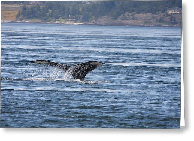 Humpback Whale - 0006 Greeting Card by S and S Photo