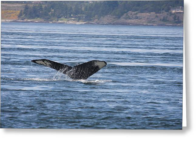 Humpback Whale - 0007 Greeting Card by S and S Photo