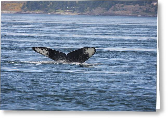 Humpback Whale - 0008 Greeting Card by S and S Photo