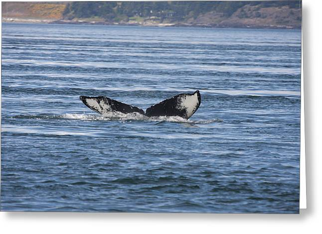Humpback Whale - 0009 Greeting Card by S and S Photo