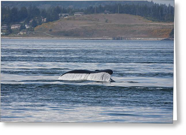 Humpback Whale - 0010 Greeting Card by S and S Photo