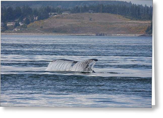 Humpback Whale - 0011 Greeting Card by S and S Photo