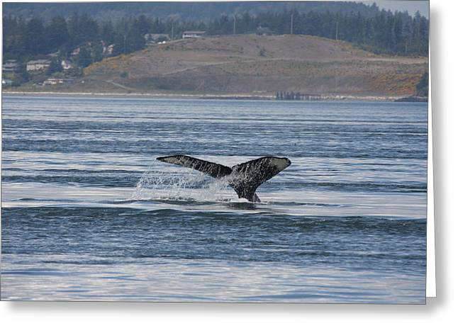 Humpback Whale - 0013 Greeting Card by S and S Photo