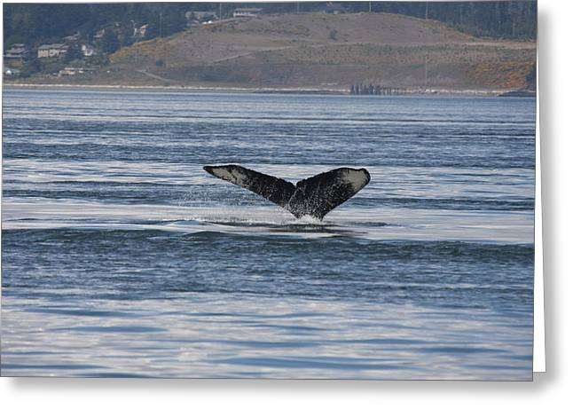 Humpback Whale - 0014 Greeting Card by S and S Photo