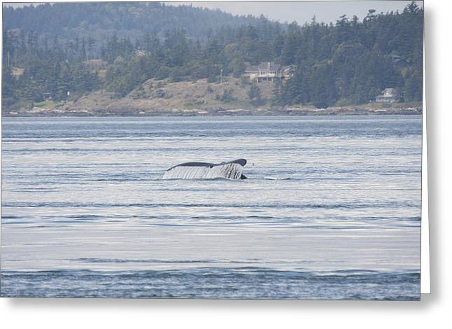 Humpback Whale - 0015 Greeting Card by S and S Photo