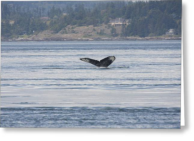Humpback Whale - 0016 Greeting Card by S and S Photo