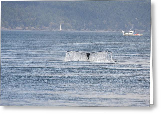 Humpback Whale - 0017 Greeting Card by S and S Photo
