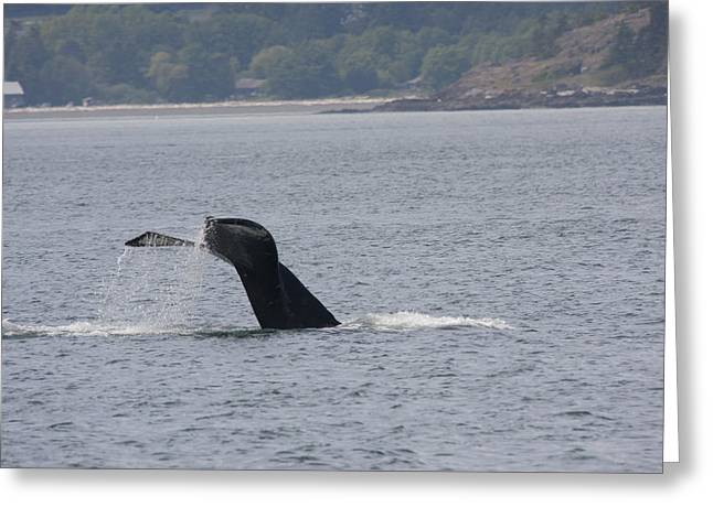 Humpback Whale - 0021 Greeting Card by S and S Photo