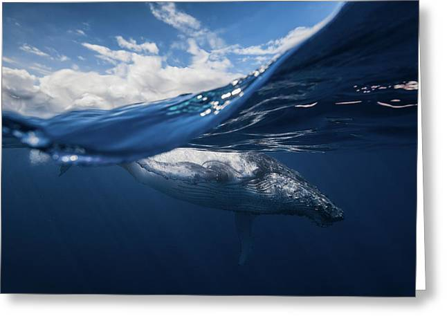 Humpback Whale And The Sky Greeting Card
