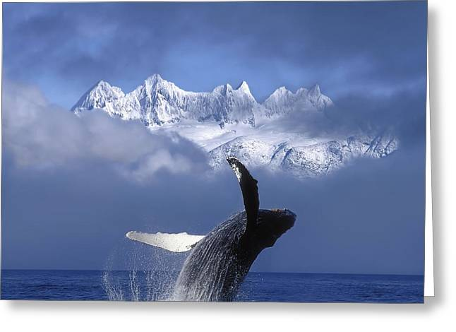 Humpback Whale Breaches In Clearing Fog Greeting Card by John Hyde