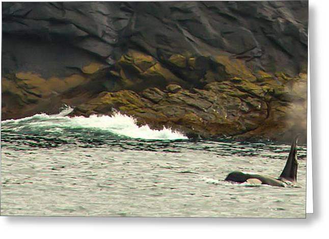 Humpback Whale Greeting Card by Debra  Miller