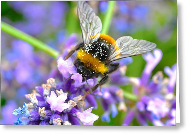 Hungry Bee Greeting Card