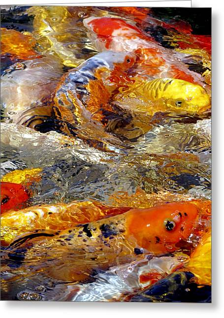 Hungry Koi Greeting Card by Bob Slitzan