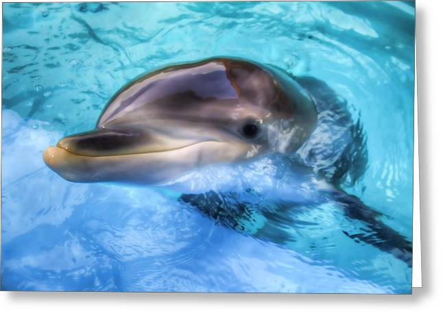 Greeting Card featuring the photograph Hungry Dolphin by Tim Stanley