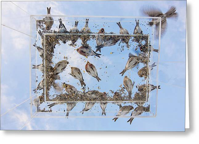 Hungry Little Birds Greeting Card by Tim Grams