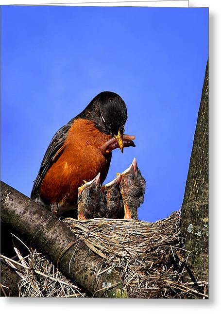 Feeding Birds Greeting Cards - Hungry Mouths Greeting Card by John Absher