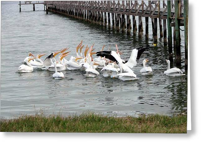 Greeting Card featuring the photograph Hungry Pelicans by Linda Cox