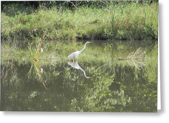 Hunter Reflected 2 Greeting Card by Mark Minier
