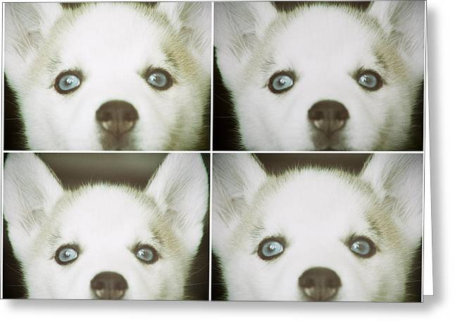 Husky Face Greeting Card by Susan Stone