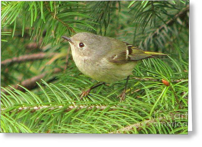 Hutton's Vireo Greeting Card