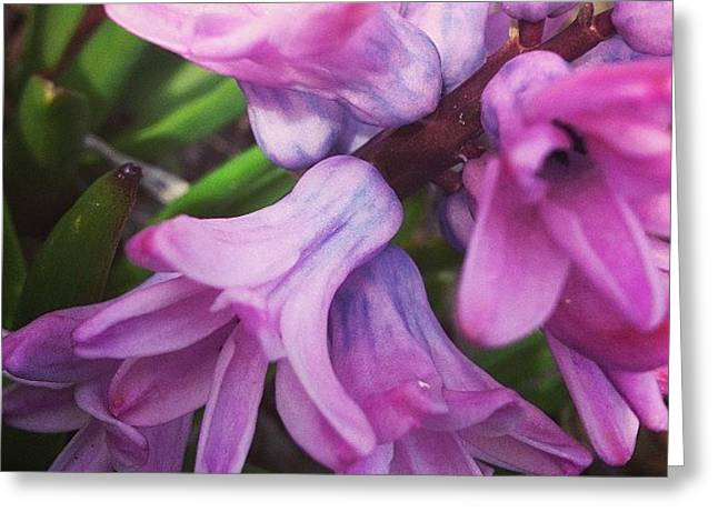 Hyacinth Flower Greeting Card