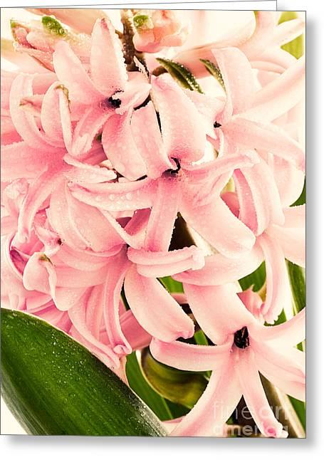 Hyacinth Flower Greeting Card