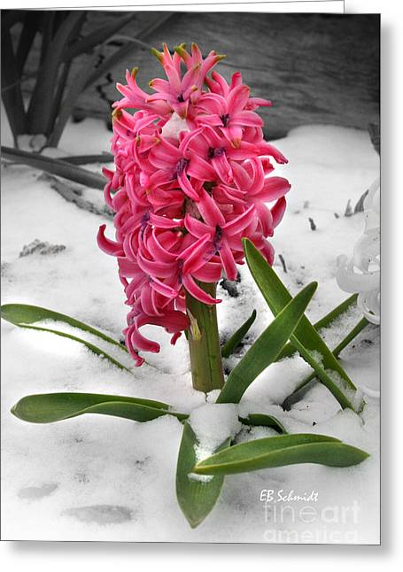 Hyacinth In The Snow Greeting Card