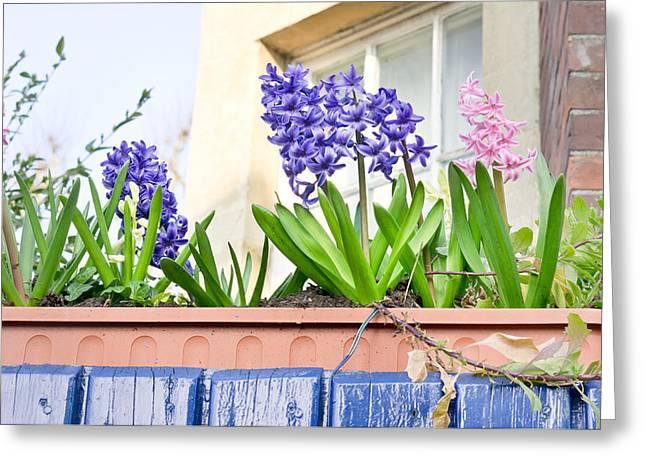 Hyacinths Greeting Card by Tom Gowanlock